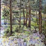 "Bluebells near the fairy stump April 2013, Pinery, CO watercolor by Kristen Muench 30"" x 22"""