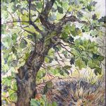 "Special Place (under the oak) Spring 2010, Pinery, CO watercolor by Kristen Muench 30"" x 22"""