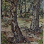 "Courting Pines Spring 2010, Pinery, CO watercolor by Kristen Muench 30"" x 22"" SOLD"